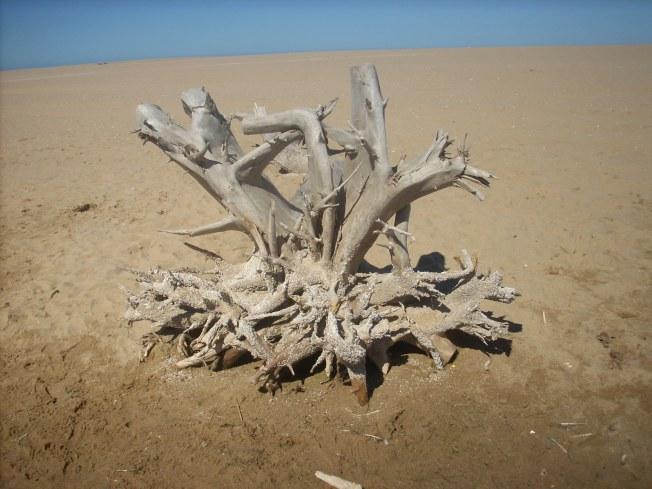 madera marina